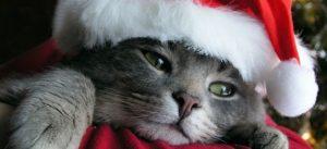 santa-claus-cat-13